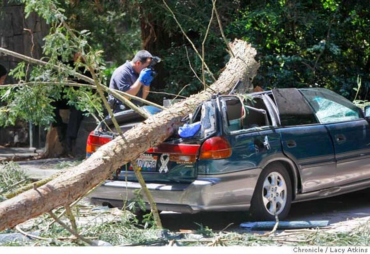 Police officer with the CSI Tony Gomes examined the scene of what is being determined to be a freak accident when a giant redwood tree fell with the strong winds, killing one pedestrian, thought to be a dog walker, Monday April 14, 2008, in Sigmund Stern Grove in San Francisco, Calif. Lacy Atkins / San Francisco Chronicle