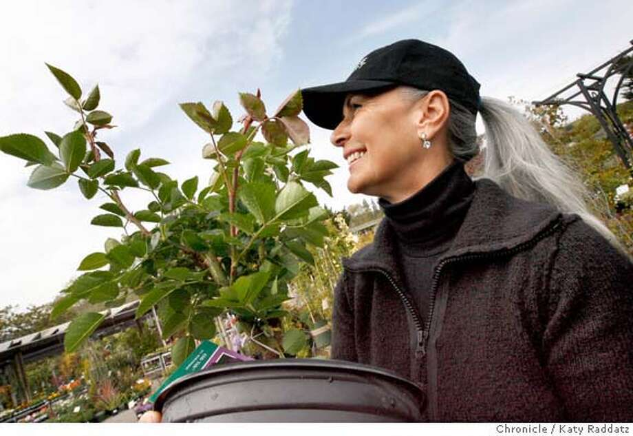 "Monique Simpson, newly arrived from Canada to Mill Valley, picks out a purple rose called ""Ebb Tide"" from Sloat Garden Center on Miller Ave. in Mill Valley, Calif. on Wednesday, April 2, 2008.  Photo by Katy Raddatz / San Francisco Chronicle Photo: KATY RADDATZ"
