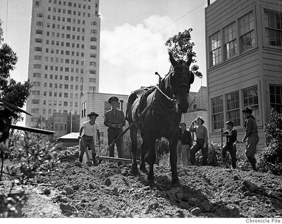 ###Live Caption:VICTORY-02MAR2005-CHRONICLE A horse plows a Victory Garden in San Francisco during World War II. CENTURY BOOK###Caption History:VICTORY-02MAR2005-CHRONICLE A horse plows a Victory Garden in San Francisco during World War II. CENTURY BOOK###Notes:###Special Instructions: Photo: CHRONICLE