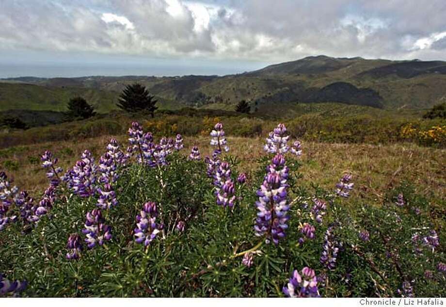 ###Live Caption:Rancho Corral de Tierra looking towards Montara Mountain with Montara Mountain blue bush lupine in the foreground. It is 4,262-acres, being the largest undeveloped tract of land remaining on the San Mateo County coast near Moss Beach, Calif., on Tuesday, April 8, 2008. Eager park service officials are planning for it to become the southern entrance to the 74,000 acre Golden Gate National Recreation Area. There is no money available to buy it from the Peninsula Open Space Trust, which spent years working on a deal to acquire the land for the express purpose of selling it to the National Park Service for half price.  Liz Hafalia / The Chronicle / {city } / 4/8/08  ** cq  Photo by Liz Hafalia / San Francisco Chronicle###Caption History:Rancho Corral de Tierra looking towards Montara Mountain with Montara Mountain blue bush lupine in the foreground. It is 4,262-acres, being the largest undeveloped tract of land remaining on the San Mateo County coast near Moss Beach, Calif., on Tuesday, April 8, 2008. Eager park service officials are planning for it to become the southern entrance to the 74,000 acre Golden Gate National Recreation Area. There is no money available to buy it from the Peninsula Open Space Trust, which spent years working on a deal to acquire the land for the express purpose of selling it to the National Park Service for half price.  Liz Hafalia / The Chronicle / {city } / 4/8/08  ** cq  Photo by Liz Hafalia / San Francisco Chronicle###Notes:Rancho Corral de Tierra looking at Montara Mountain with Montara Mountain blue bush lupine in the foreground. It is 4,262-acres, being the largest undeveloped tract of land remaining on the San Mateo County coast near Moss Beach, Calif., on Tuesday, Apr###Special Instructions:�2008, San Francisco Chronicle/ Liz Hafalia  MANDATORY CREDIT FOR PHOTOG AND SAN FRANCISCO CHRONICLE. NO SALES- MAGS OUT. Photo: Liz Hafalia