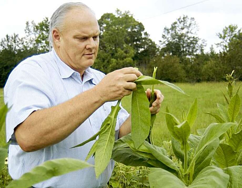 In an Thursday, Aug. 6, 2009 photo, Scott Byars of Corinth, Miss., snaps the tops of his homegrown tobacco plants in his garden beside his home, in Corinth, Miss. Byars says by snapping the tops of the plants the leaves grow larger and it prevents the plant from flower and pollinating. (AP Photo/Michael H. Miller) Photo: Michael H. Miller, AP
