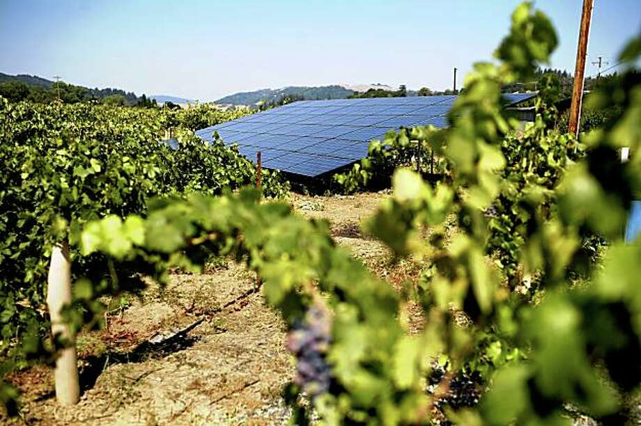 Markus Bokisch at the Bokisch Vineyards in Victor, Ca. Photo: Lianne Milton, Special To The Chronicle