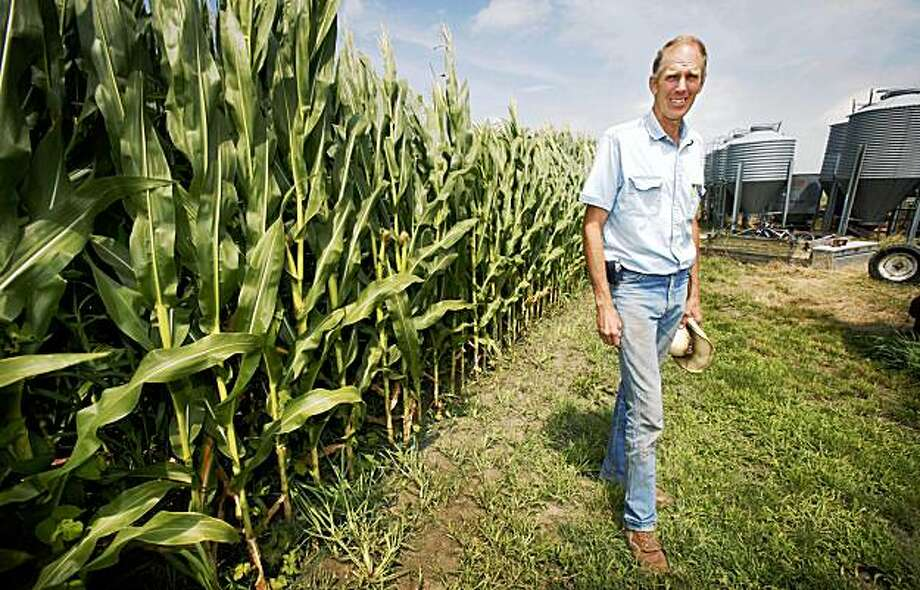 In this July 14, 2009 photo, farmer Keith Van Waardhuizen stands near a cornfield on his farm in Oskaloosa, Iowa. Photo: Charlie Neibergall, AP