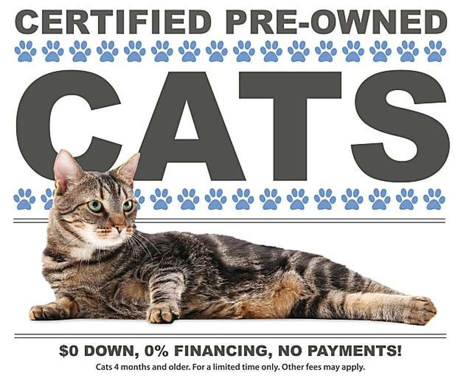 "This poster released by the Michigan Humane Society shows the poster for ""Catfax"" which allows would be owners to get the history of their ""new"" cat before they adopt.(AP Photo/Michigan Humane Society)**NO SALES** Photo: Michigan Humane Society, AP"