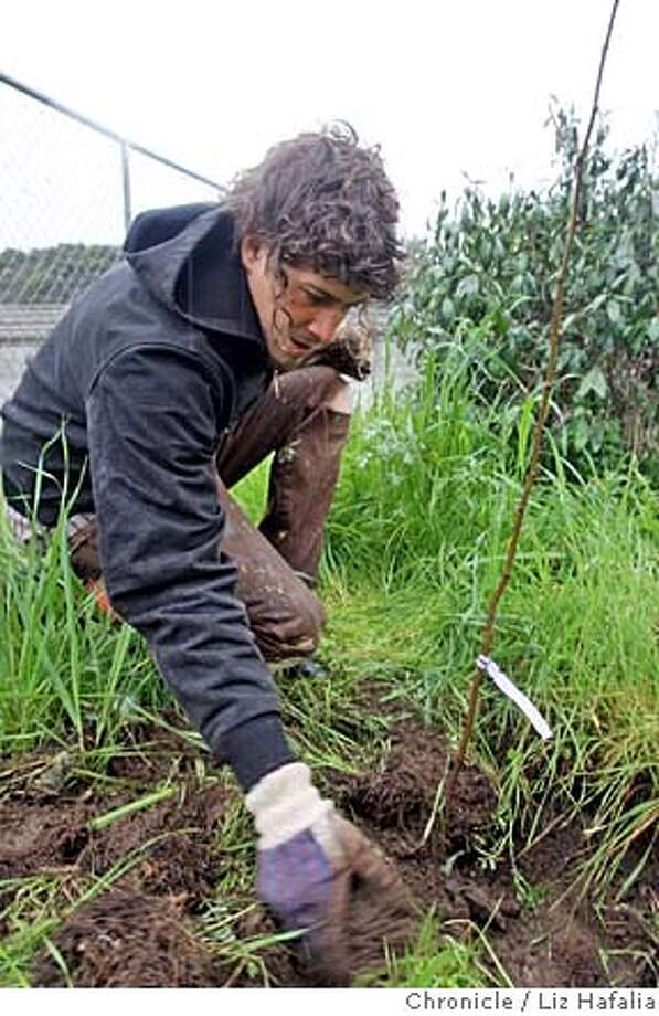 ###Live Caption:Antonio Roman-Alcala spearheaded a community effort to work on the Alemany Farm which was deserted for two years when SLUG ran out of funding. He is planting trees for windbreak on the property in San Francisco, Calif., on saturday, feb. 23, 2008. Photo by Liz Hafalia/San Francisco Chronicle###Caption History:Antonio Roman-Alcala spearheaded a community effort to work on the Alemany Farm which was deserted for two years when SLUG ran out of funding. He is planting trees for windbreak on the property in San Francisco, Calif., on 2/23/08. Photo by Liz Hafalia/San Francisco Chronicle###Notes:Antonio Roman-Alcala spearheaded a community effort to work on the Alemany Farm which was deserted for two years when SLUG ran out of funding. He is planting trees for windbreak on the property in San Francisco, Calif., on 2/23/08.  Liz Hafalia/The Chro###Special Instructions:�2008, San Francisco Chronicle/ Liz Hafalia  MANDATORY CREDIT FOR PHOTOG AND SAN FRANCISCO CHRONICLE. NO SALES- MAGS OUT. Photo: Liz Hafalia