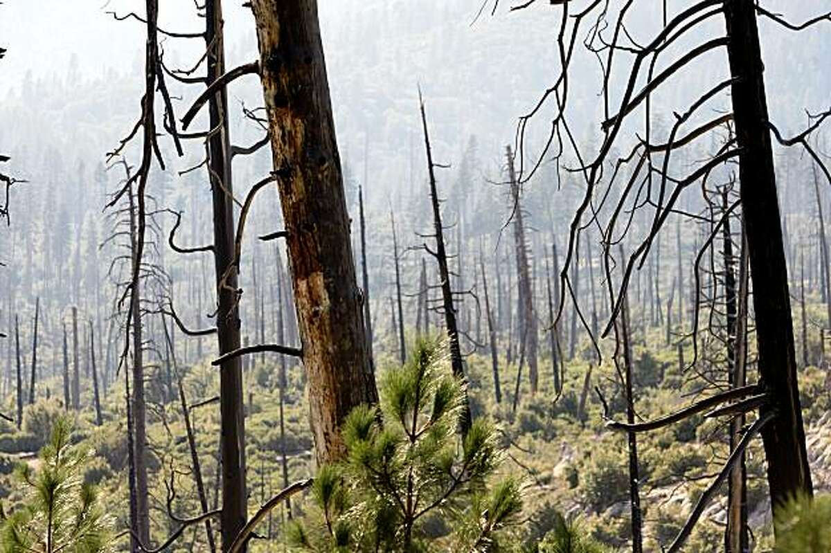 U.S. Geological Survey and University of Washington scientists have determined that large trees have declined in Yosemite National Park during the 20th century. A decline in large trees means habitat loss and possible reduction in some animal species and large-diameter trees generally resist fire more than smaller trees, potentially slowing forest regeneration after fires.