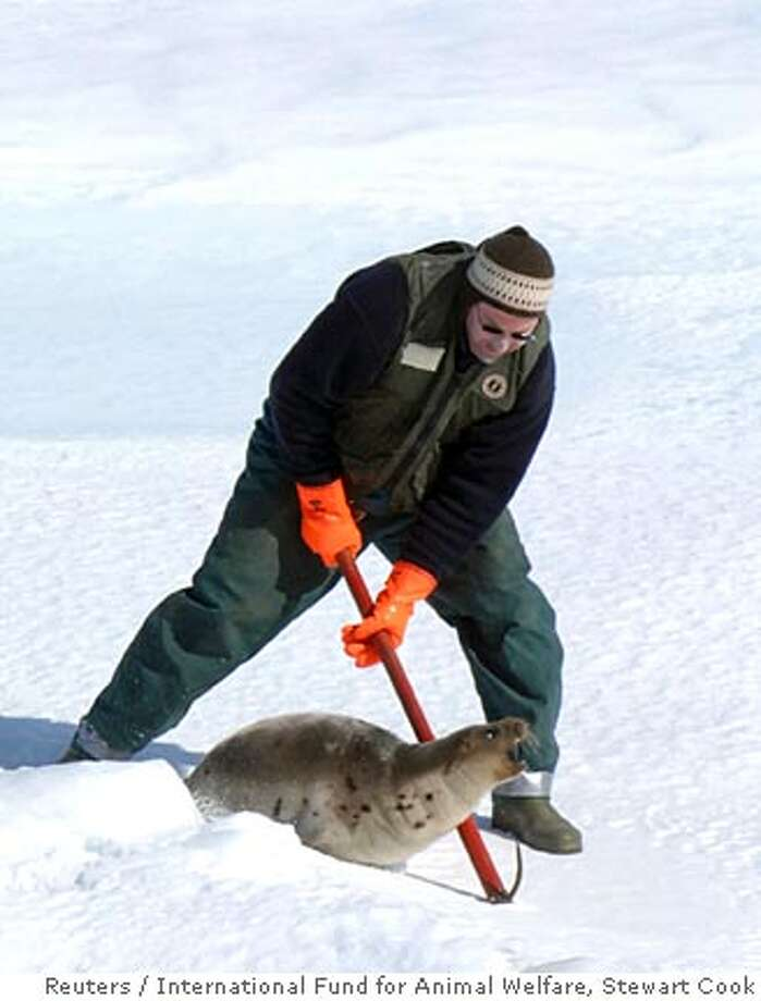 ATTENTION EDITORS - ADDING RESTRICTIONS A hunter clubs a harp seal on the opening day of s 2008 commercial seal hunt in the Gulf of St. Lawrence March 28, 2008. REUTERS/International Fund for Animal Welfare/Stewart Cook/Handout (CANADA) MANDATORY CREDIT. NO SALES. NO ARCHIVES. FOR EDITORIAL USE ONLY. NOT FOR SALE FOR MARKETING OR ADVERTISING CAMPAIGNS. Photo: HO