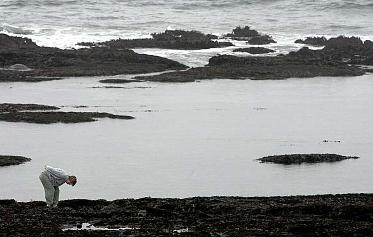 A visitor inspects marine life at the Fitzgerald Marine Reserve in Moss Beach, Calif. on Wednesday, November 26 2008.