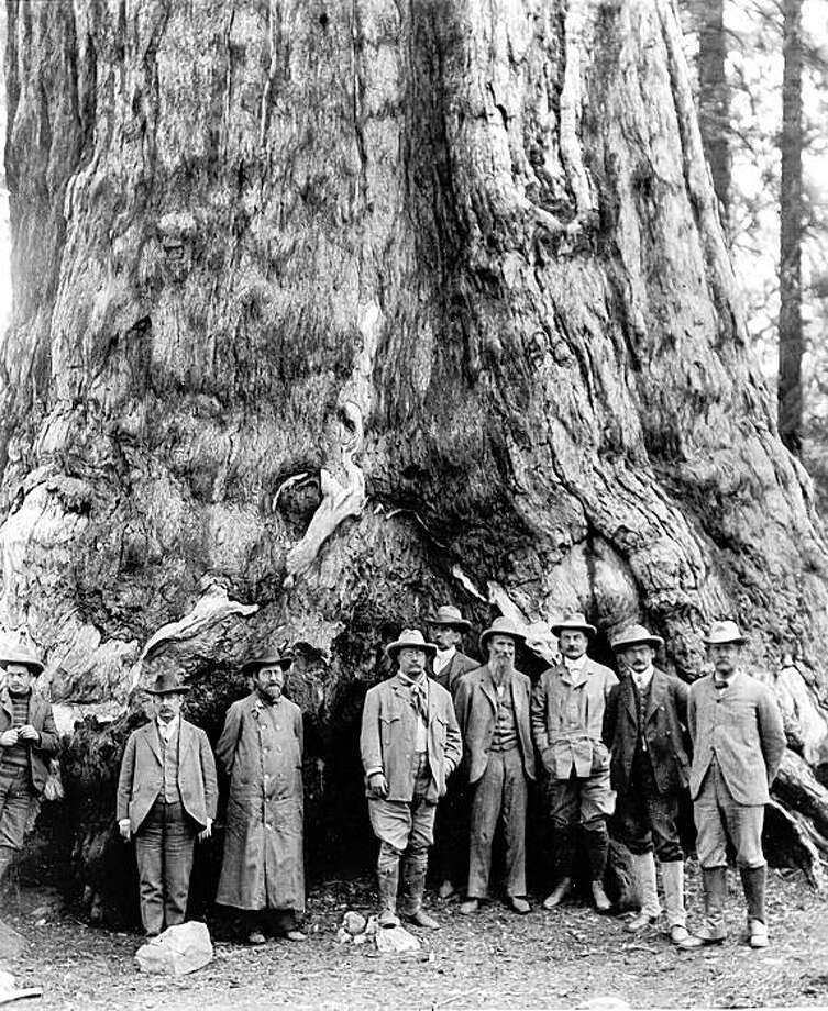 "Page 539-Theodore Roosevelt and John Muir at Mariposa Grove in California. Courtesy of the National Park Service. photo courtesy harpercollins from the book: ""the wilderness warrior"""