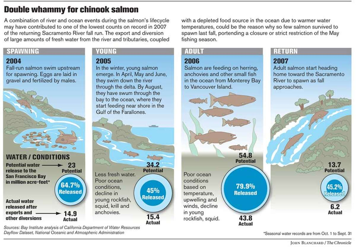 Double whammy for chinook salmon. Chronicle graphic by John Blanchard