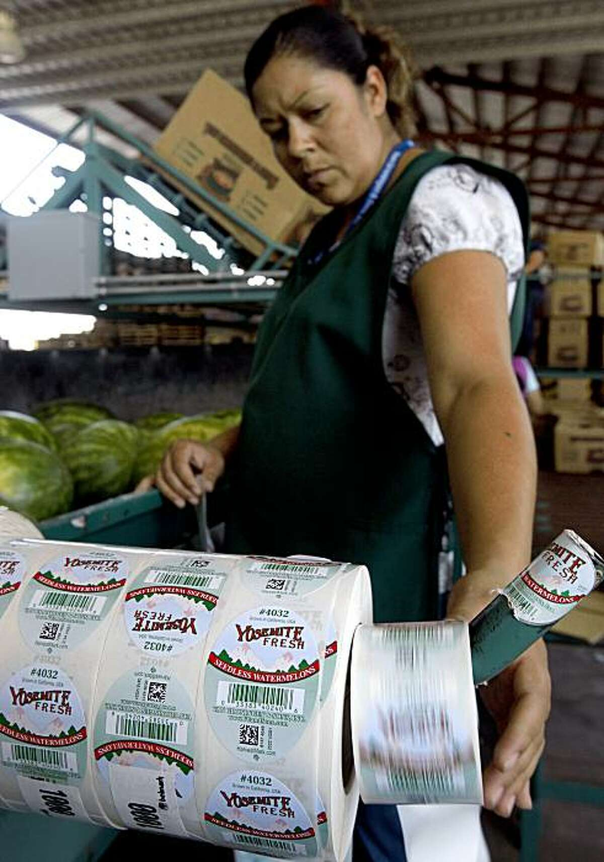 Victoria Gonzalez attaches HarvestMark tracking labels (foreground) to watermelons at the Van Groningen & Sons produce company in Manteca, Calif., on Tuesday, July 28, 2009. The new bar code system helps consumers keep track of where and when produce was grown and processed in case of an E. coli outbreak.