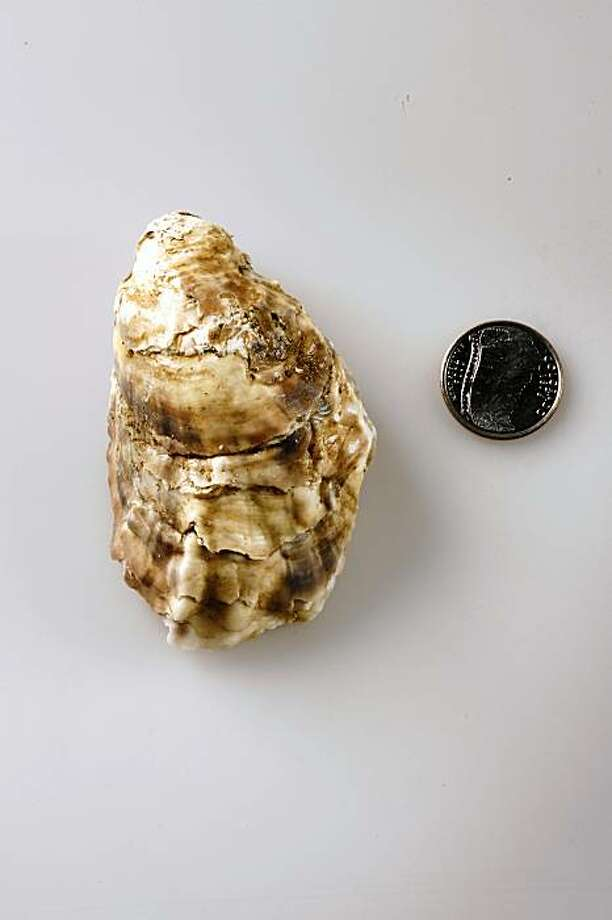 Effingham BC oyster in San Francisco, Calif., on July 22, 2009. Photo: Craig Lee, Special To The Chronicle