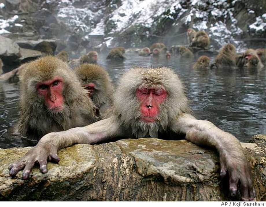 TRAVEL SNOW MONKEYS -- Japanese Macaque monkeys dip in a hot spring in the snow at Jigokudani Wild Monkey Park in Yamanouchi, Nagano prefecture, central Japan, Monday, Dec. 6, 2004. Some 250 monkeys in two groups, inhabit the nearby mountains and are fed in the park. (AP Photo/Koji Sasahara) Photo: KOJI SASAHARA