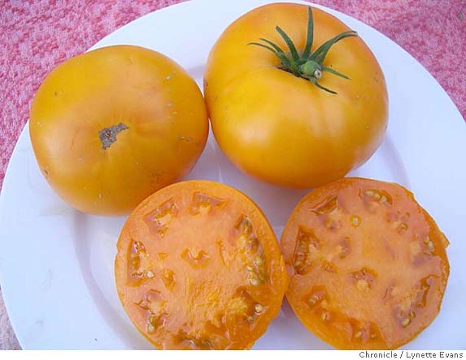 Yellow 'Brandywine' tomatoes Photo: Lynette Evans