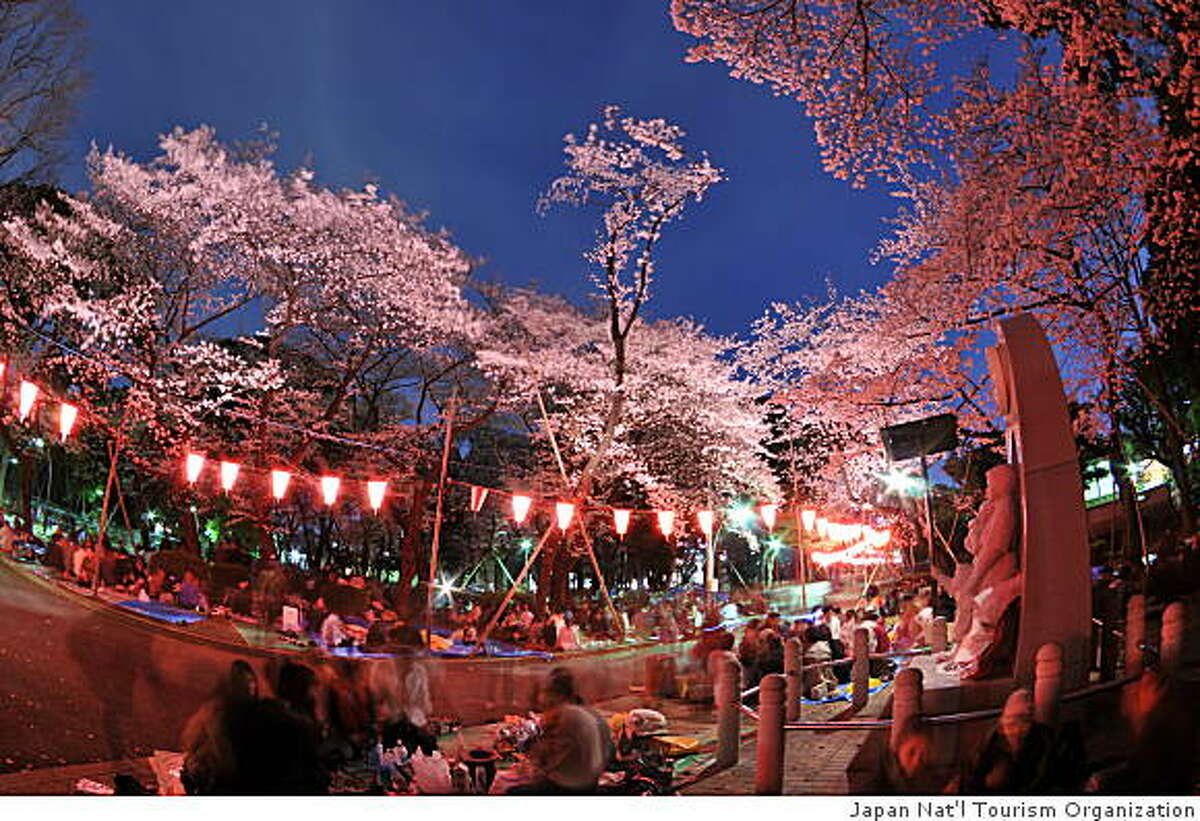 Cherry blossoms at night in Japan.