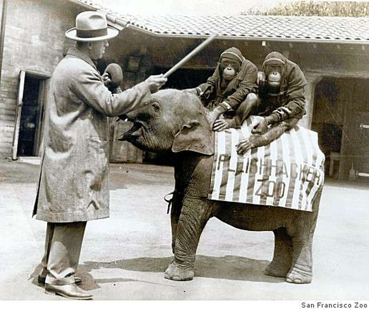 San Francisco Zoo through the years. George Bistany, the first director of the Fleishhacker Zoo, stands with two chimpanzees sitting on a baby elephant in 1931.