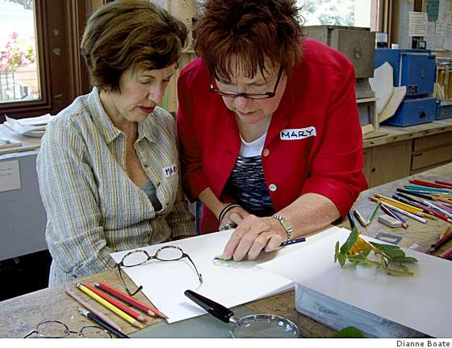 Mary Harden with a student doing color pencil instruction in the Arboreautum classroom where she teaches a botanical drawing class. Photo: Dianne Boate