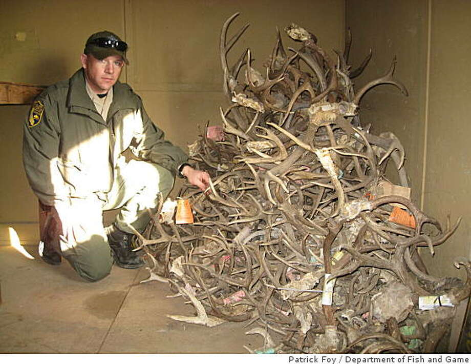 California Department of Fish and Game warden Byron Hernandez poses with a pile of antlers found on a property in Williams, Calif., on Jan. 3, 2009. The antlers were found in a meat processing building on the property and the resident of the home was convicted of poaching deer. Photo: Patrick Foy, Department Of Fish And Game