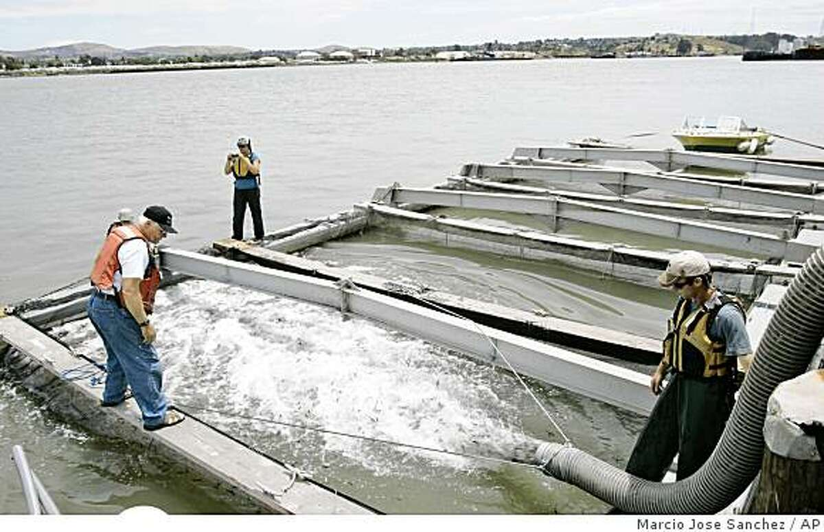 Biologists Trevor Kennedy, bottom right, and Roxanne Kessler, top center, release smolts, younger versions of chinook salmon, onto holding pens with the help of boat captain Doug Wagoner, bottom left, in Vallejo, Calif., Thursday, June 4, 2009. Biologists from the Fishery Foundation of California were releasing 550,000 smolts into the San Francisco Bay Thursday in hopes of restoring commercial and recreational fishing. Federal fisheries regulators released a wide-ranging plan Thursday to help the struggling chinook salmon, saying state and federal water projects have contributed to the decline of the fish and other endangered species in the Central Valley. The National Marine Fisheries Service recommends a new water temperature management plan for the upper Sacramento River and Shasta Reservoir and opening dams to allow for better salmon migration, among other things, in the new report. (AP Photo/Marcio Jose Sanchez)