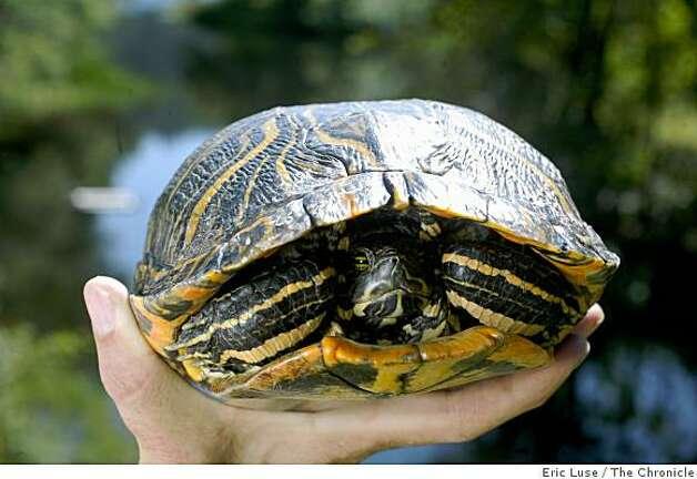 Aquatic Turtle Water Temperature : Download Aquatic Turtle Water Temperature