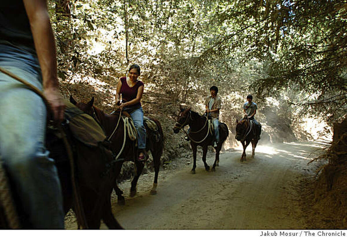 Fonda Yoshimoto, Yoshi Sawaki, and Chris Reed ride on horseback with Logan Ayers, left foreground, at his parents' Armstrong Woods Pack Station near the Armstrong Redwood State Reserve on September 2, 2004 in Guerneville, Calif.