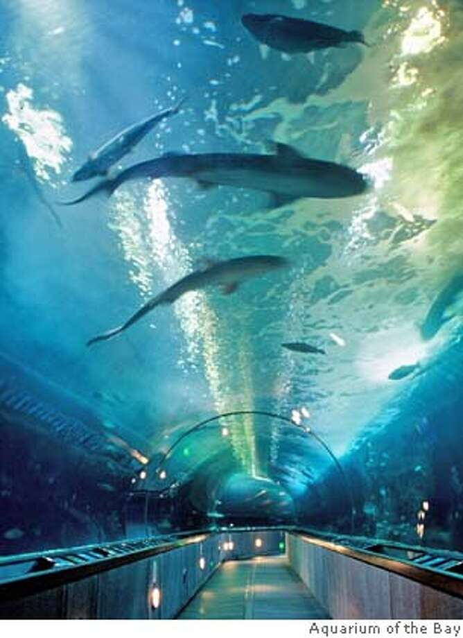 The tunnel at Aquarium of the Bay in SF will have a family sleepover under the shark tank 1/26/2008  Ran on: 01-20-2008  Aquarium of the Bay is hosting a &quo;Sleep With the Sharks Family Sleepover&quo; on Saturday. Photo: Aquarium Of The Bay