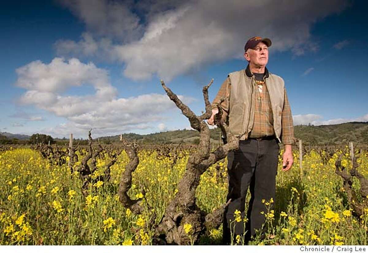 Photo of Fred Peterson, owner of Peterson Winery. He has been making wine and farming grapes in Dry Creek Valley for 25 years. Photo of Fred standing next to an old Zinfandel vine in a field of mustard greens. on 1/7/08 in Healdsburg. photo by Craig Lee / The Chronicle Ran on: 01-13-2008