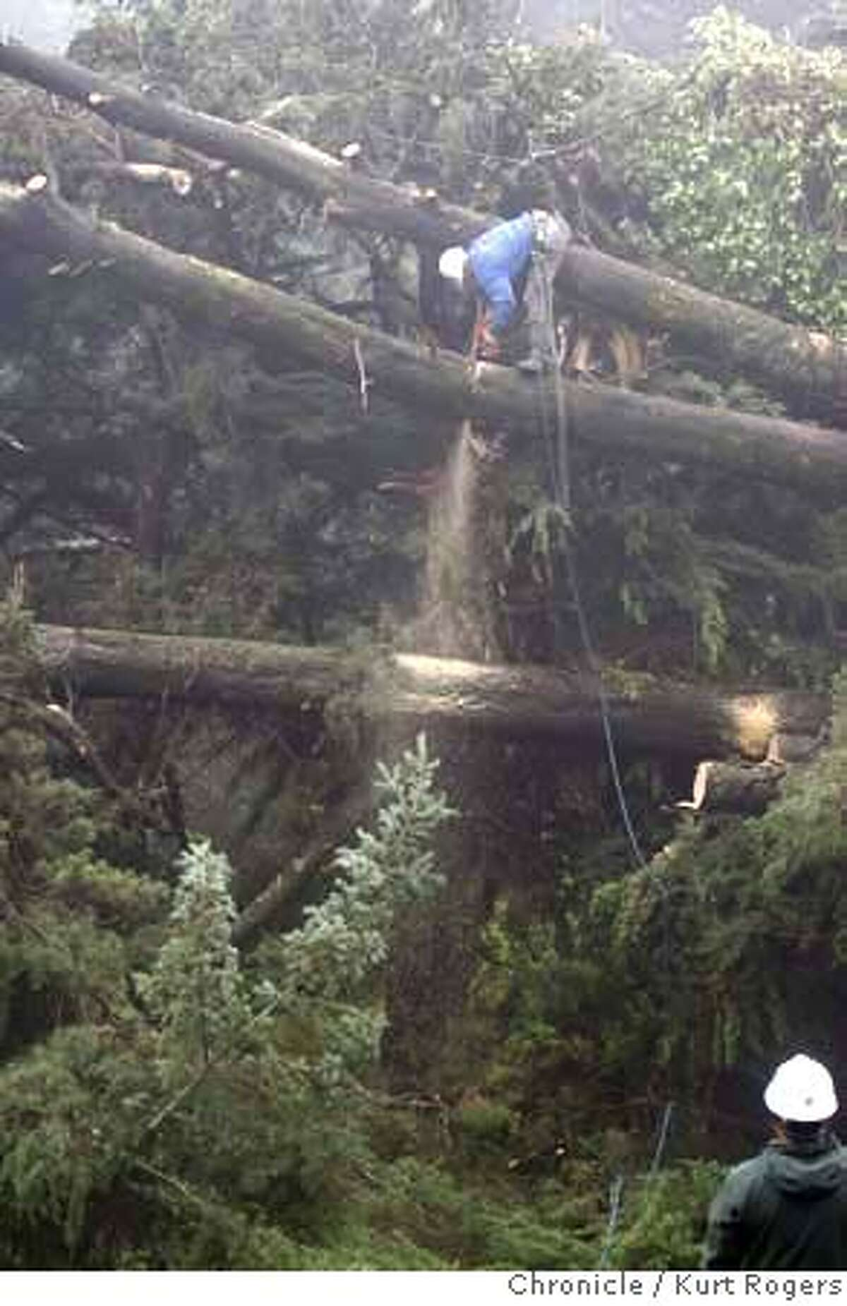 Octavio Cardoza 22 (cq) of Davy Tree cuts on a fallen cypress tree. PG&E crews called in the work crew to help clear downed trees from power lines. LINEMEN10_0029_KR.jpg Kurt Rogers / The Chronicle Photo taken on 1/9/08, in Mill Valley, CA, USA MANDATORY CREDIT FOR PHOTOG AND SAN FRANCISCO CHRONICLE/NO SALES-MAGS OUT