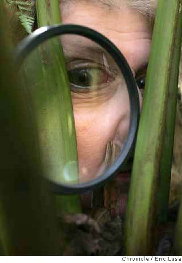 leahgarden09_129_el.jpg  Leah taking a very close look at her fern with a magnifying glass.  Leah Garchik wrote a satire piece on her garden and a consultant who explained to her that her plants looked sad and would all have to be replaced. Eric Luse / The Chronicle Photo taken on 1/2/08, in San Francisco, CA, USA  Name cq by source  Leah Garchik MANDATORY CREDIT FOR PHOTOG AND SAN FRANCISCO CHRONICLE/NO SALES-MAGS OUT Photo: Eric Luse