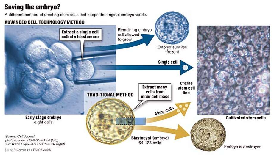 Saving the embryo? Chronicle graphic by John Blanchard