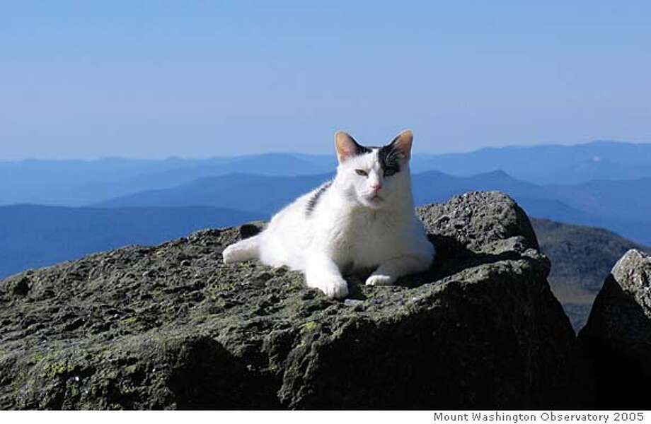 This 2005 photo provided by the Mount Washington Observatory shows the housecat Nin atop Mount Washington, N.H. The cat was the mascot for Mount Washington Observatory for a dozen years. Nin officially retired Wednesday, Dec. 26, 2007, and is moving off the mountain to live with Diane Holmes and Mike Pelchat, both rangers at Mount Washington State Park, at their home in Gorham, N.H.. (AP Photo/Mount Washington Observatory) **NO SALES** **2005 PHOTO PROVIDED BY MOUNT WASHINGTON OBSERVATORY. NO SALES** Photo: Mount Washington Observatory