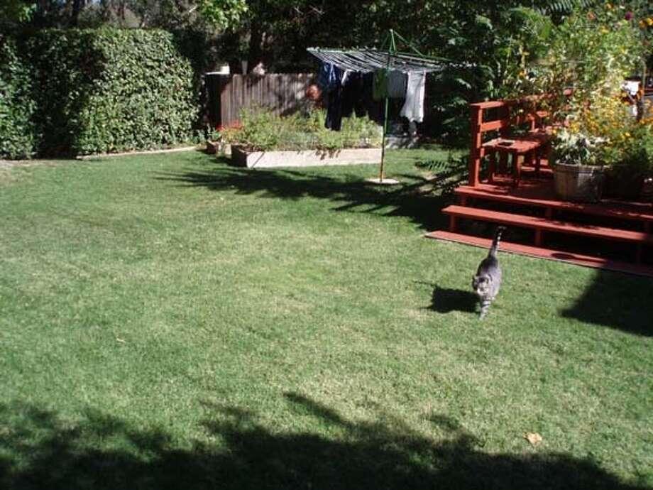 Alison rood's backyard lawn  OLYMPUS DIGITAL CAMERA Photo: Alison Rood