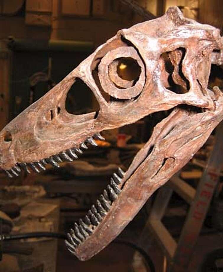 Dino Death Trap x14017 Photo: � NGT, 2006