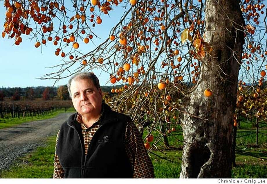 WINEMAKER07_608_cl.JPG  Photo for story on this year's Winemaker of the Year and the five Winemakers to Watch. This is Robert Pellegrini, Winemaker to Watch. He is next to his persimmon tree with his vineyard behind him.  on 11/27/07 in Santa Rosa. photo by Craig Lee / The Chronicle MANDATORY CREDIT FOR PHOTOG AND SF CHRONICLE/NO SALES-MAGS OUT Photo: Photo By Craig Lee