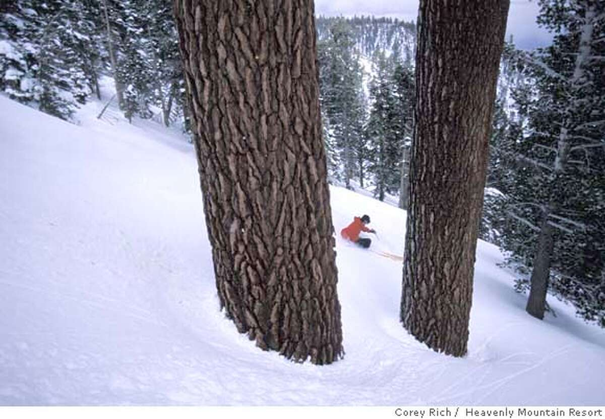heavenly25_ph2.JPG Skiers and snow boarders make their way through a stand of old Red Fir trees at about 9,000 feet in the Nevada Woods area at Heavenly Mountain Resort. Corey Rich / Heavenly Mountain Resort 2006 Ran on: 12-04-2007 Heavenly Valley is a delightful snowy playground but is not so heavenly in the eyes of environment- alists. It only earned a C for its environmental practices.