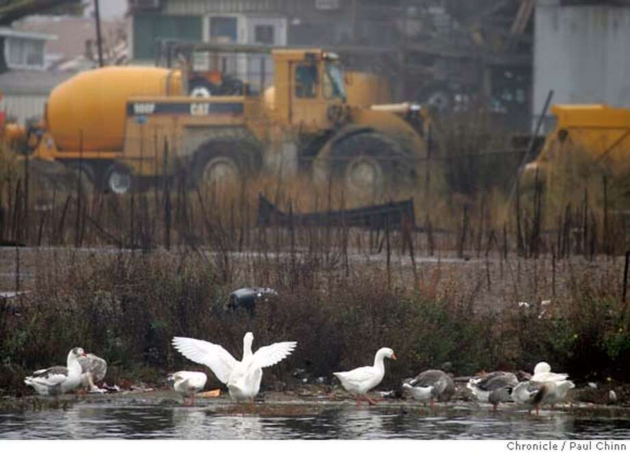 oakhousing_039_pc.jpg  Ducks gather on the shoreline in front of the Hanson Aggregate gravel yard on the north end of the proposed redevelopment project near Jack London Square in Oakland, Calif. on 11/29/05. Oakland�s largest housing development in more than 30 years would re-shape a desolate section of the waterfront into a vibrant new neighborhood with 3,200 new dwellings and a park. Mayor Jerry Brown and other supporters say it will help make the city more vibrant by luring thousands of professionals to live along the now-industrial tract near downtown.  PAUL CHINN/The Chronicle Ran on: 11-30-2005  Geese congregate on the Oakland shoreline near a gravel yard on the north end of the proposed Oak to Ninth redevelopment project. Ran on: 11-30-2005  Geese congregate on the Oakland shoreline near a gravel yard on the north end of the proposed Oak to Ninth redevelopment project. MANDATORY CREDIT FOR PHOTOG AND S.F. CHRONICLE/NO SALES - MAGS OUT Photo: PAUL CHINN
