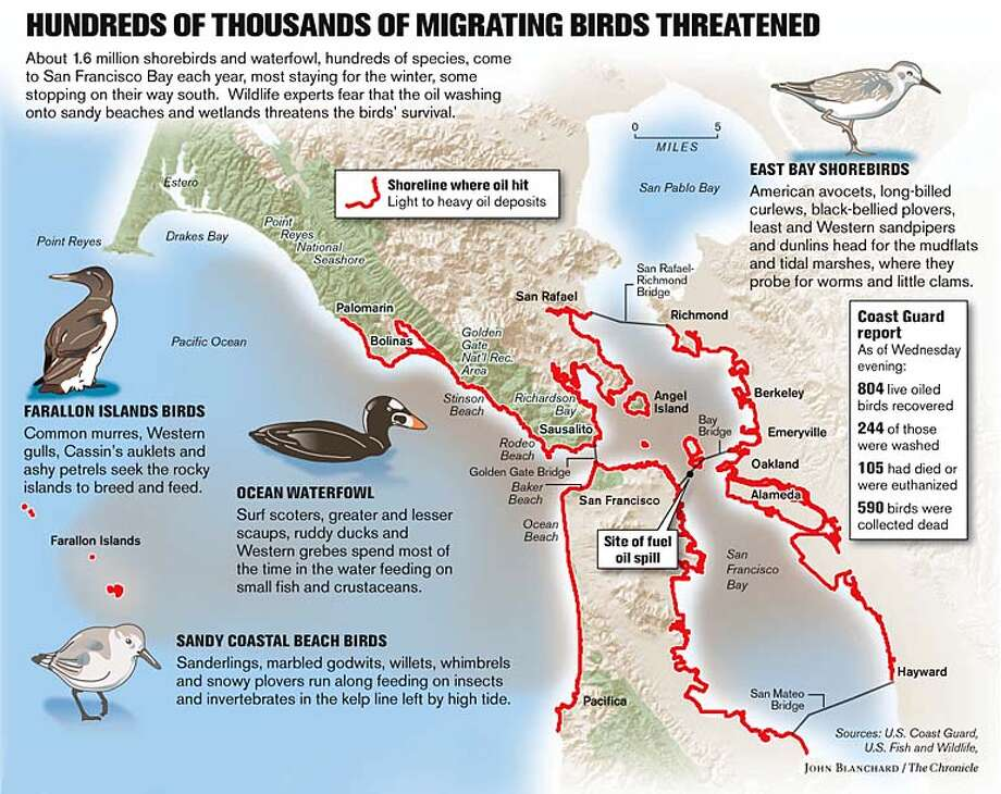 Hundreds of Thousands of Migrating Birds Threatened. Chronicle graphic by John Blanchard
