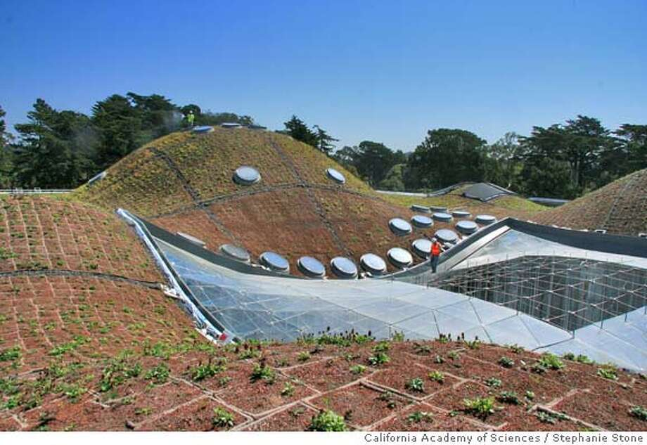 The California Academy Of Sciencesu0027 Beautiful New Living Roof May Well  Spark A Revolution