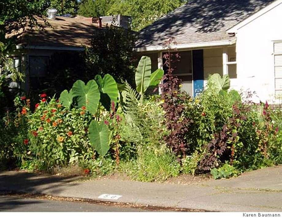 Karen Baumann's front yard in Sacramento  OLYMPUS DIGITAL CAMERA Photo: Karen Baumann