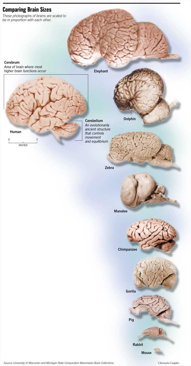 comparison of brain structure in mammals Effects of domestication on brain structure and behavior in mammals comparison of brain sizes of wild effects of domestication on brain.