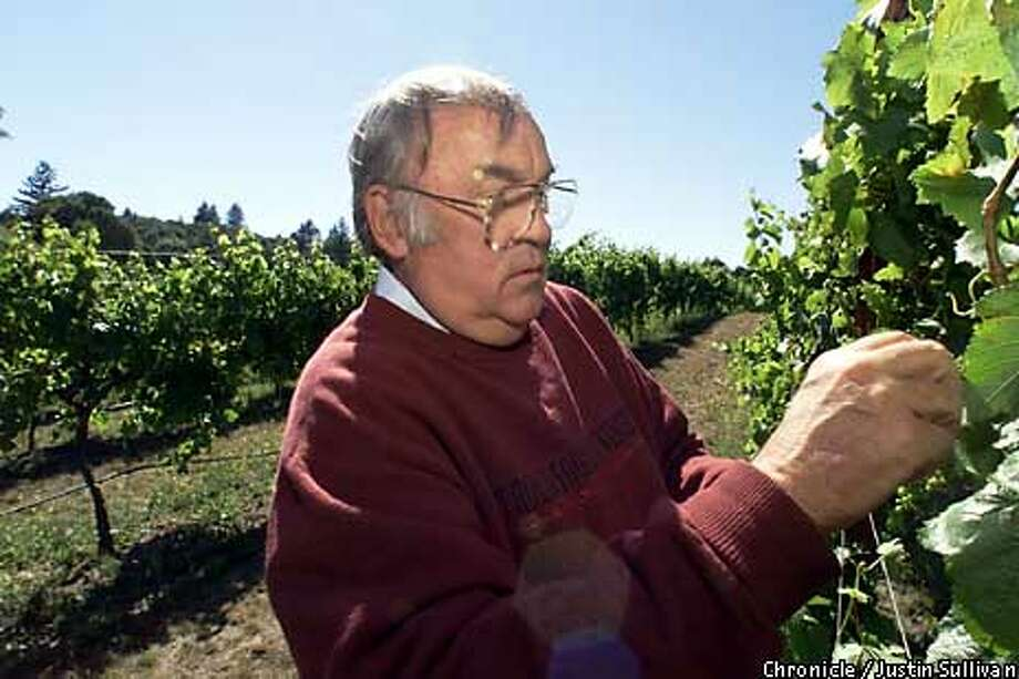 Dr. Thomas Fogarty picked leaves from grapevines at his prize-winning family-owned vineyard in Portola Valley. Chronicle Photo by Justin Sullivan