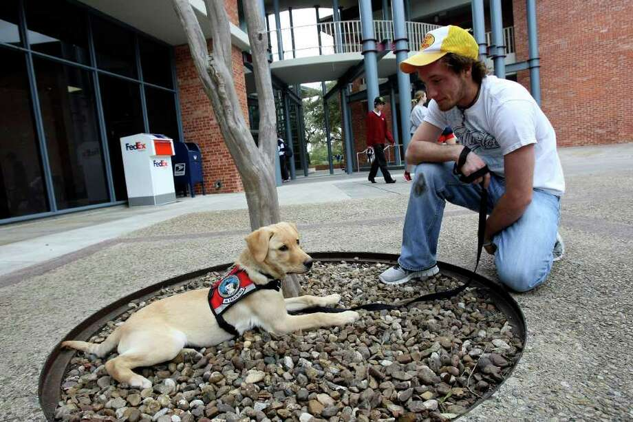 Joey Lucci sits with Jjurgens, Trinity's newest student, a 4-month-old yellow lab named Jjurgens. The dog will stay on campus until October before entering explosives detection training through the Lackland-based TSA's Puppy Program. The university has previously brought puppies to campus as incentives to snap their yearbook photos and to provide stress relief during finals week. Jurgens, who already has a hundred Twitter followers and more than 300 Facebook fans and is named after Port Authority police officer Paul W. Jurgens of Long Island who was killed in 9/11. Photo: HELEN L. MONTOYA, San Antonio Express-News / ©2012 San Antonio Express-News