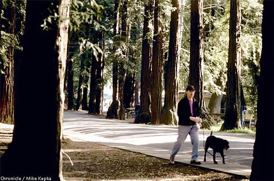 Near the historic redwood grove in Dolliver Park, trees seem to sprout from the pavement. Chronicle photo by Mike Kepka