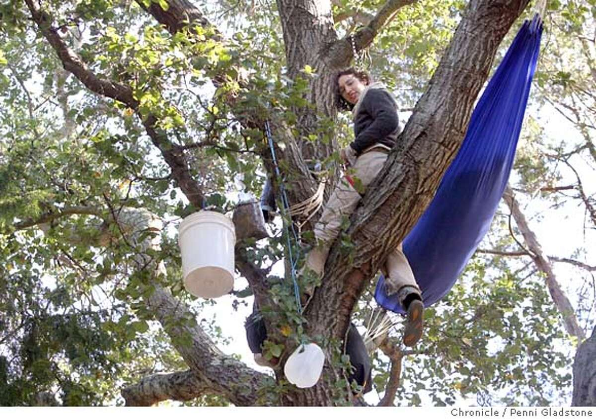 treesitters04 Jess, would not give last name and is not a Cal student. She sleeps up in the tree to save it. tree-sitters in Berkeley are occupying some oaks and a redwood in a grove on the west side of the UC Berkeley football stadium. They're protesting a plan to cut down the trees for a new Cal athletics facility. Leader of tree sitters is apparently Zachary Runningwolf, who ran unsuccessfully for Berkeley mayor last month Event on 12/3/06 in Berkeley. Penni Gladstone / The Chronicle MANDATORY CREDIT FOR PHOTOG AND SF CHRONICLE/ -MAGS OUT