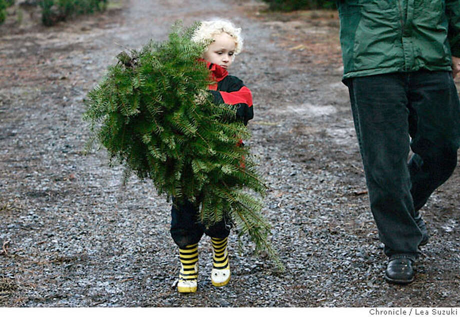 family30_300_ls.JPG  Ian Parsons,4, of Sebastopol, carries the Christmas tree he cut with his family on a visit to Garlock Tree Farm.  Families find and cut a tree for Christmas at the Garlock Tree Farm in Sebastopol on Sunday November 26, 2006. The Garlock Tree Farm in Sebastopol has been offering Christmas Trees to families for 40 years and boasts a selection of Douglas Fir, White Fir, Scotch Pine and Monterey Pine.  Photo by Lea Suzuki/The San Francisco Chronicle  Photo taken on 11/26/06, in Sebastopol, CA. **(themselves) cq. Photo: Lea Suzuki