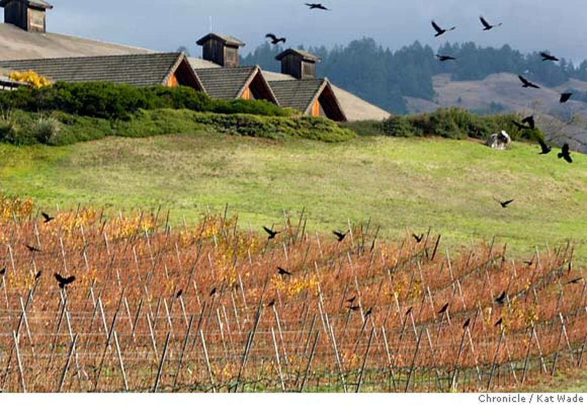 SPARKLERS01_010_KW_.jpg Grape vines in full fall colors and a flock of Black Birds beneath the French owned Roederer Estate winery where they create sparkling wines in the coastal region of Philo, California on Tuesday November 21, 2006. Kat Wade/The Chronicle Mandatory Credit forphotographer, Kat Wade, Mags out