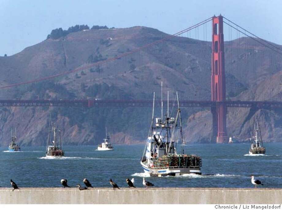 Crab boats head out to sea under the Golden Gate Bridege after agreeing on a price for their crab. Photo taken mid-day on Nov. 14, 2006 from pier 45.  Liz Mangelsdorf / The Chronicle Photo: Liz Mangelsdorf