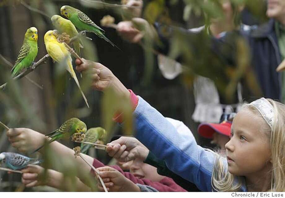 binnowee_0254_el.jpg  Audrey Brooke,7, SF, feeding a Grass Parakeet inside the aviary.  600 Australian birds, Grass Parakeets, Cockatiels and Eastern Rosellas in the grand openiong of Binnowee Landing at the San Francisco Zoo  Photographed on June 8, 2006 in San Francisco.  Eric Luse/The Chronicle MANDATORY CREDIT FOR PHOTOG / Photo: Eric Luse