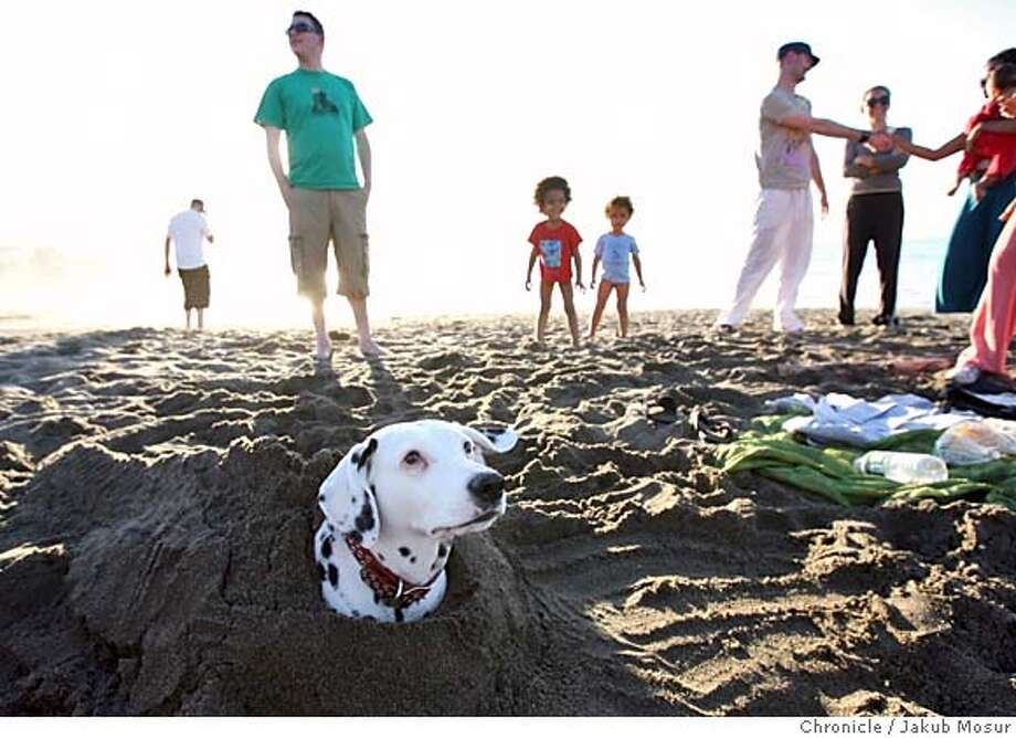 WeatherArt08_01_JMM.JPG  Jenny, a 9 year old dalmatian, sits under sand after being buried by her owner Corey Mathhues on Baker Beach in San Francisco during a warm day.  Event on 2/7/06 in San Francisco. JAKUB MOSUR / The Chronicle MANDATORY CREDIT FOR PHOTOG AND SF CHRONICLE/ -MAGS OUT Photo: JAKUB MOSUR