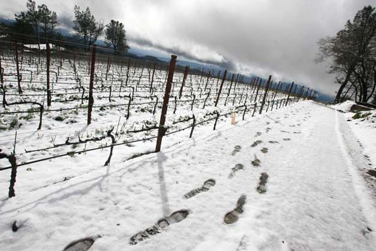 nbweather_0148_el.JPG The photographers footsteps in The Robert Craig Cabernet Sauvignon vineyard looking West across at another snow blanketed vineyard on Howell Mountain, above St. Helena in the Napa Valley received a few inches of snow blanketing some vineyards. Photographer: Eric Luse /The Chronicle